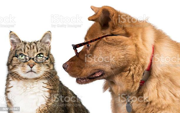 Cat and dog with glasses picture id509142347?b=1&k=6&m=509142347&s=612x612&h=a80tntckgwy0vnsttnhuqut ceykhaxbkadvqcf9c54=