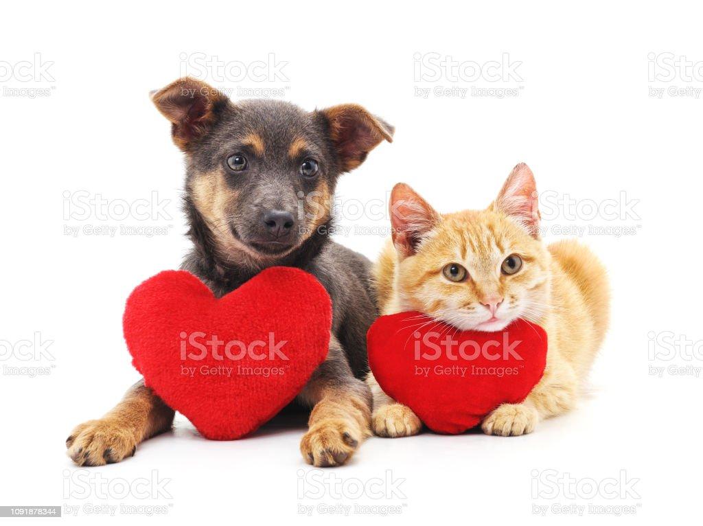 Kedi ve köpek kırmızı kalpler. - Royalty-free Arkadaşlık Stok görsel