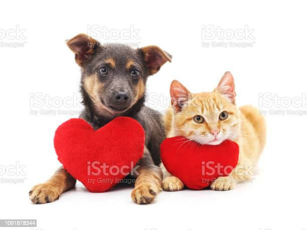 Cat and dog with red hearts picture id1091878344?b=1&k=6&m=1091878344&s=612x612&h=npuaqerdnrsyot5sya0lerubjmwjbbz1fv6m9dpgc4i=