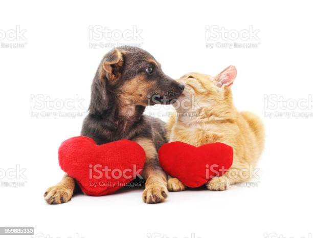 Cat and dog with red hearts picture id959685330?b=1&k=6&m=959685330&s=612x612&h=vznwwf0whxzemu mqdhok dxvknkhhs5zqeptu0nzko=