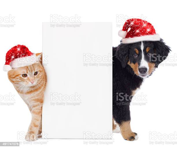 Cat and dog with santa hat picture id491747078?b=1&k=6&m=491747078&s=612x612&h=5ziugf4xyy  ksirsun4rfcpozu9nl fa hsxv8mg a=