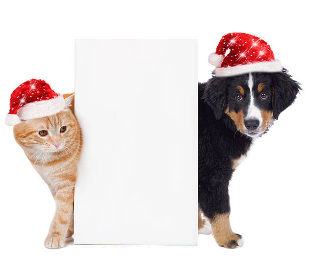 Cat and dog with santa hat picture id491747078?b=1&k=6&m=491747078&s=612x612&w=0&h=qnzaghplyxjcl6ex7pmahy4usgwaby9azb19mclea2s=
