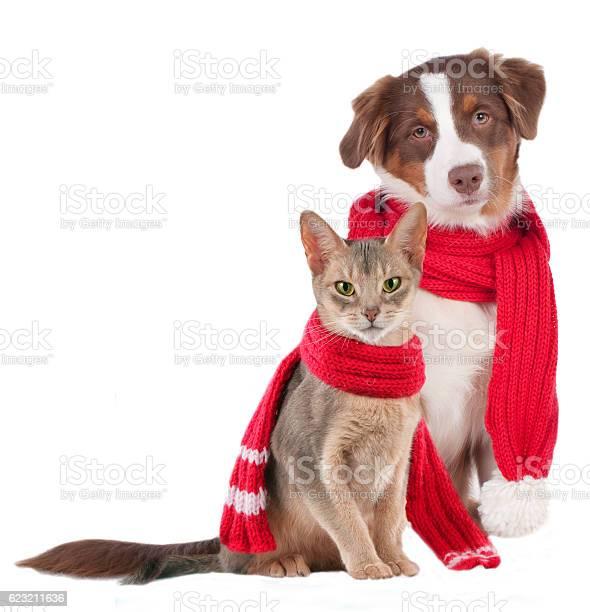 Cat and dog with shawl picture id623211636?b=1&k=6&m=623211636&s=612x612&h=2miziio21ve5cw9k1 zoe4okpvelcyuikbpix zec0m=