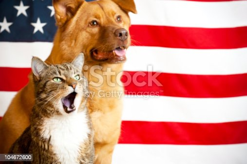 490776989 istock photo cat and dog with US flag 104672600