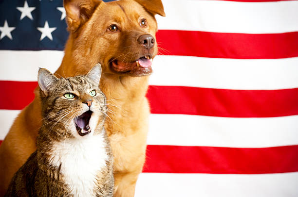 cat and dog with US flag stock photo
