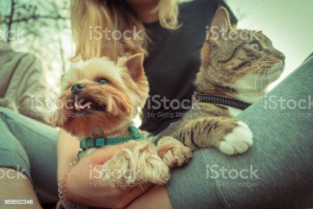Cat and dog yorkshire terrier sits next to the cat picture id959552346?b=1&k=6&m=959552346&s=612x612&h=rvdo2lbv w5lrkaipcyljzwjbgsirizzupjasugad a=