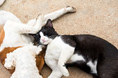 istock cat and dog.Cute animals are lying together outdoor 1128669497