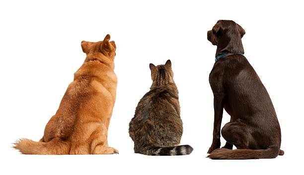 Cat and dogs looking up stock photo