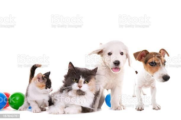 Cat and dogs picture id157640751?b=1&k=6&m=157640751&s=612x612&h=wd78jooao0 gpie7a0tynyf8cdmsrs dpbj4ohc9afy=