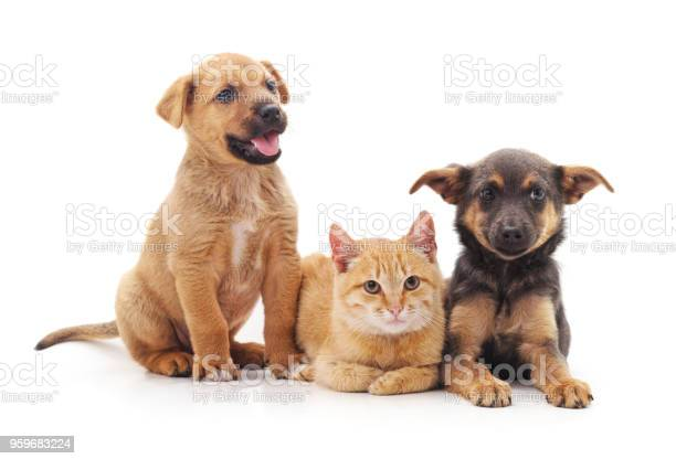 Cat and dogs together lying picture id959683224?b=1&k=6&m=959683224&s=612x612&h=kforoh0illma7z0s6ygie4dxi96wqycrbu4cepxfjuo=