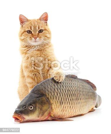 istock Cat and fish. 944779222