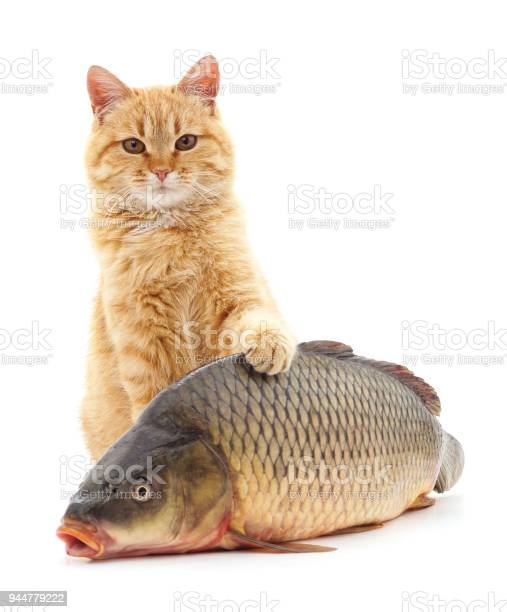 Cat and fish picture id944779222?b=1&k=6&m=944779222&s=612x612&h=d7jbn pcr9gllbuhxmljerxxxqh sslfcci2rwc7ct0=