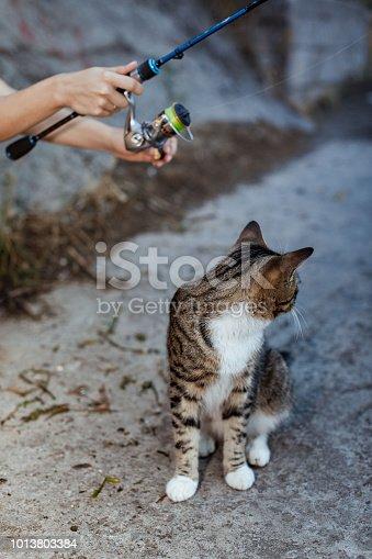 139888169istockphoto cat and fisherman with fishing rod wheel 1013803384