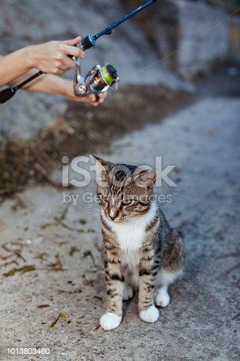 139888169istockphoto cat and fisherman with fishing rod wheel 1013803460