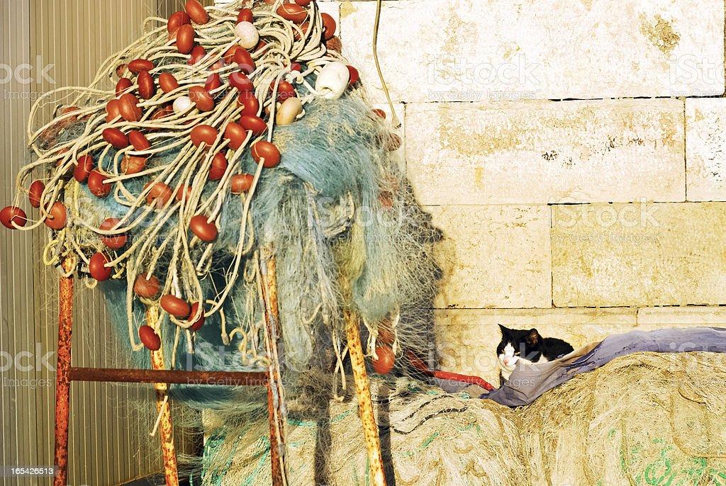 Cat and fishing net in rovinj, croatia royalty-free stock photo
