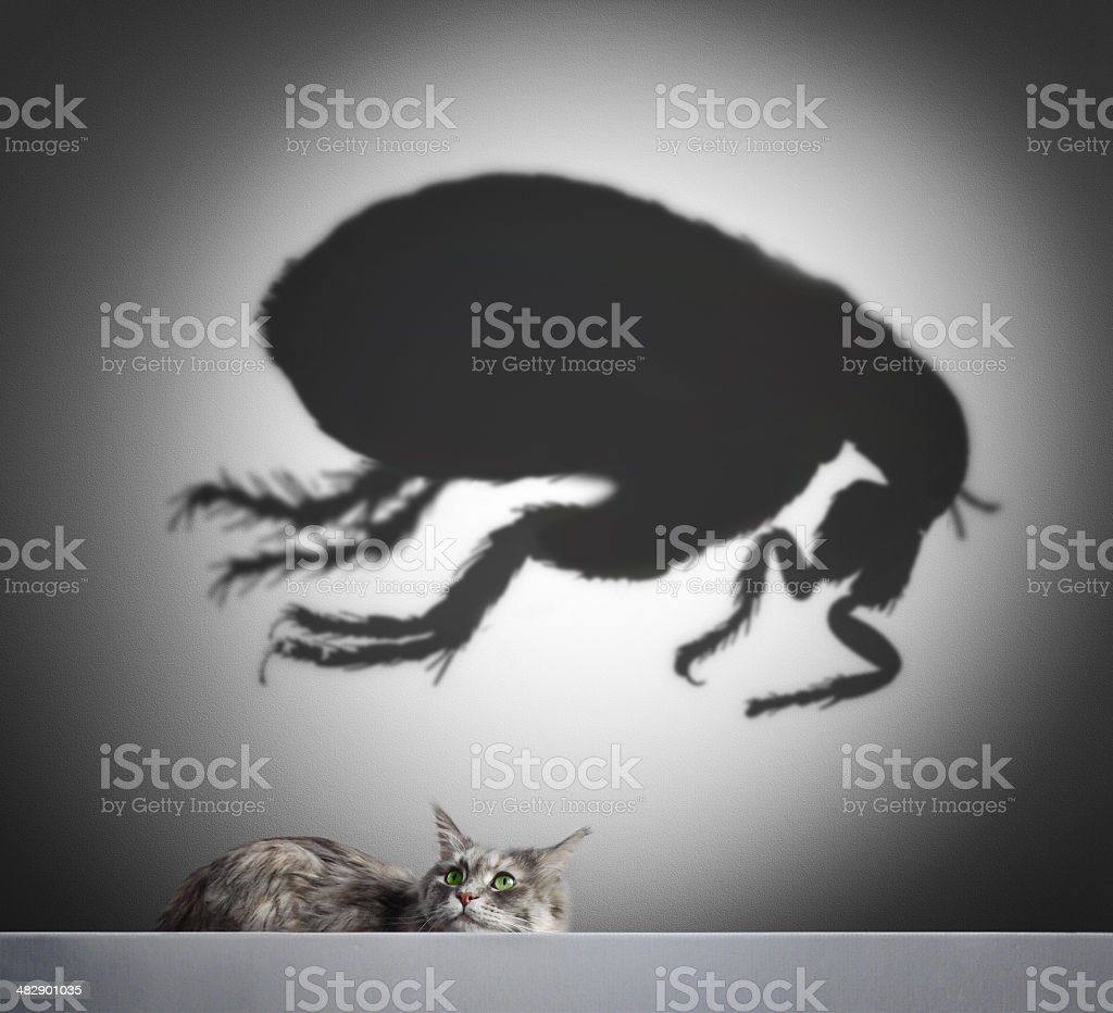 Cat and flea shadow stock photo