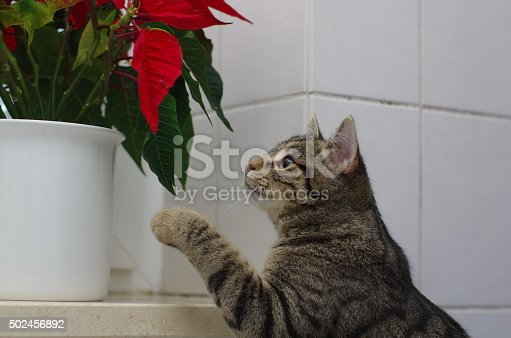 Cat and flower (winter rose)