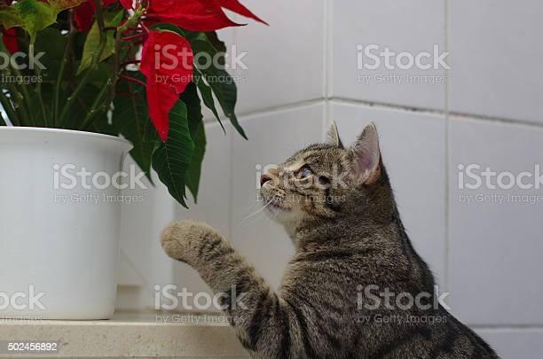 Cat and flower picture id502456892?b=1&k=6&m=502456892&s=612x612&h=wsemnyukznyacvondxbzq4vjmjhrsdtdjmeoiik20bi=