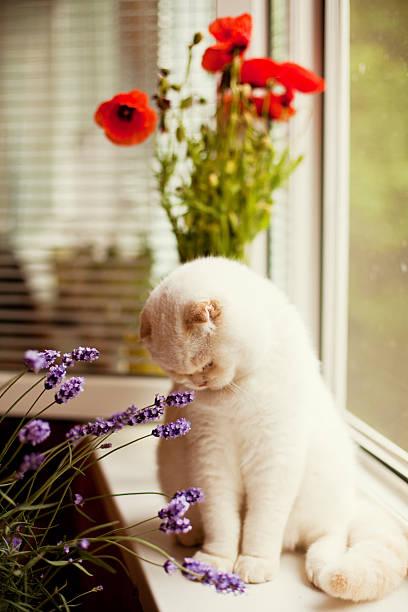 Cat and flowers picture id464644396?b=1&k=6&m=464644396&s=612x612&w=0&h=uu9k8f8uals5dmpr02qvy7rkvjaaxowwbrx6t6qwae4=
