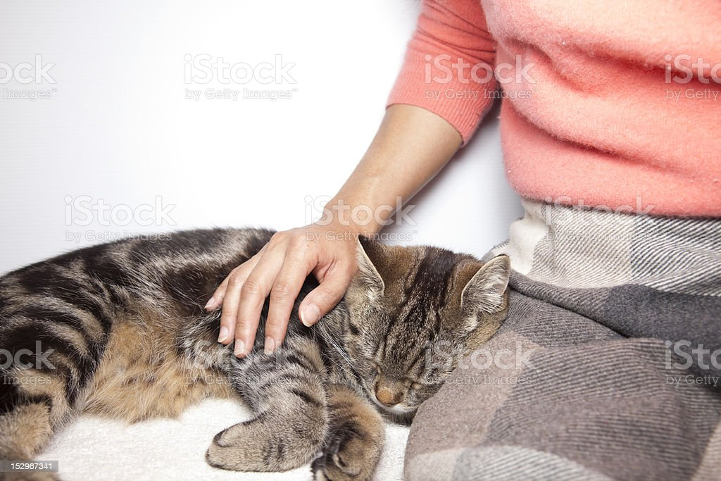 Cat and Girl royalty-free stock photo