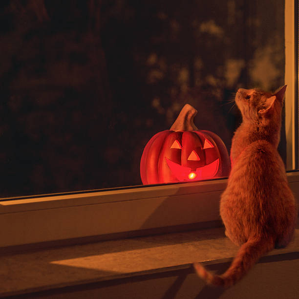 Cat and halloween pumpkin glowing standing on the window sill picture id492315394?b=1&k=6&m=492315394&s=612x612&w=0&h=glmvomytyd yycgjl esrdr1jkxofywudbxi1o0iv6c=