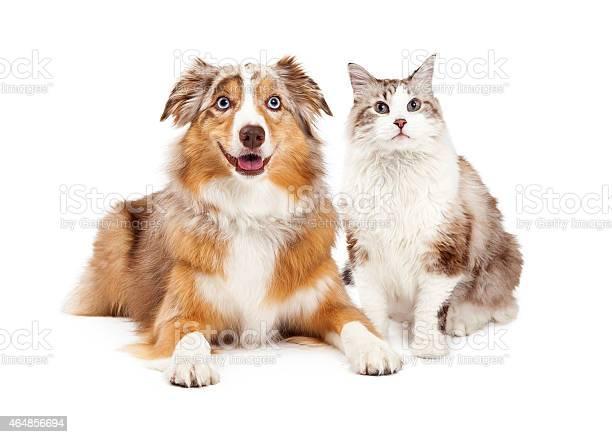 Cat and happy dog together picture id464856694?b=1&k=6&m=464856694&s=612x612&h=vm8ea2c2ncbdyhhlsaojckhyrw0jtrzjp675czxfpwq=