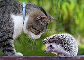 猫とハリネズミ