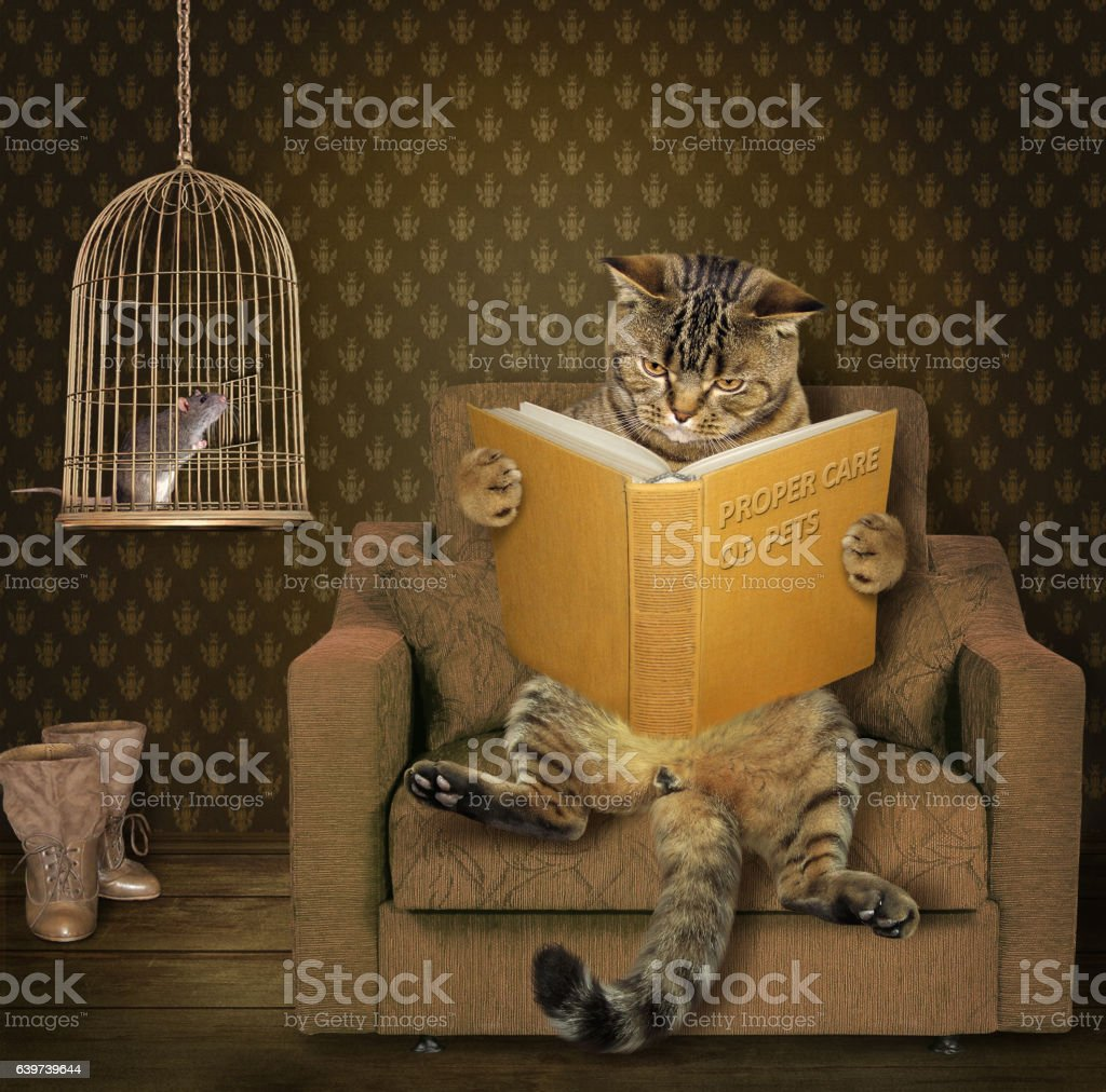 Cat and his pet stock photo