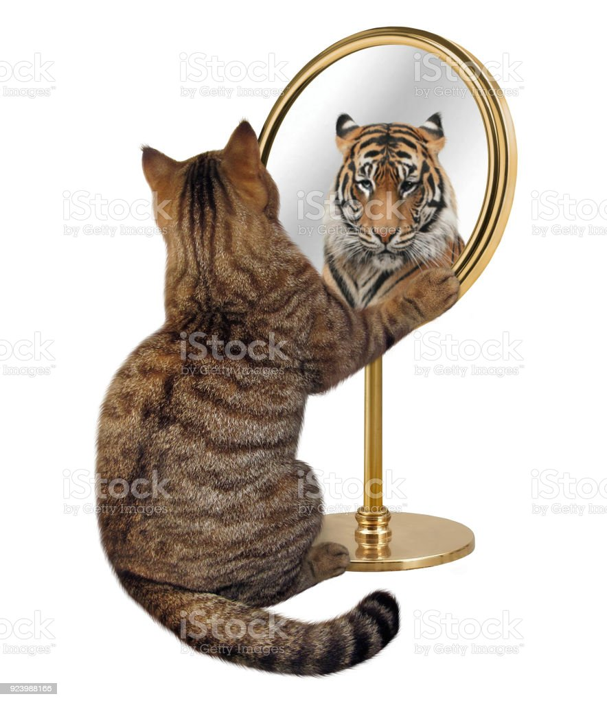 Cat and his reflection 2 stock photo