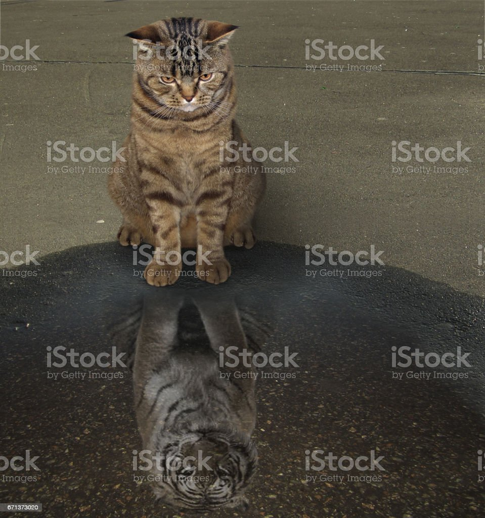 Cat and his reflection stock photo