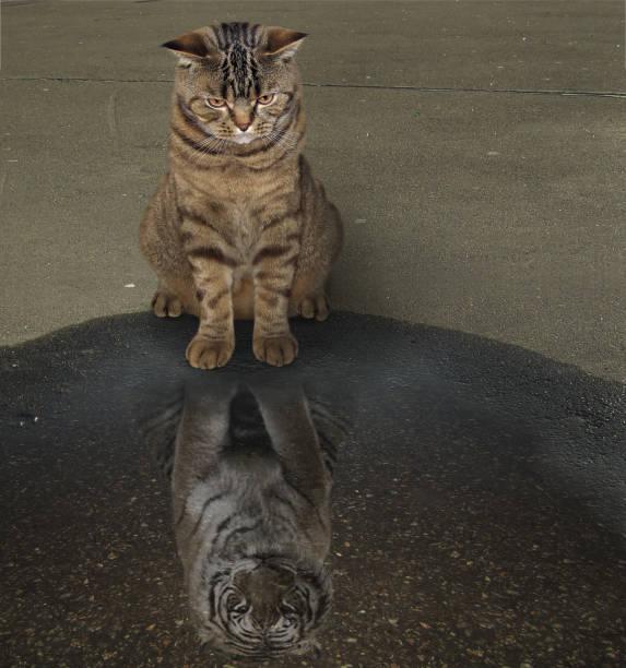 katze und seine reflexion - spiegelung stock-fotos und bilder