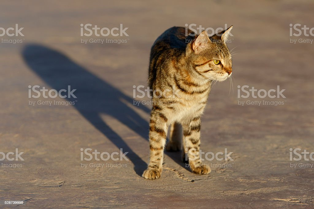 Cat and his Shadow stock photo
