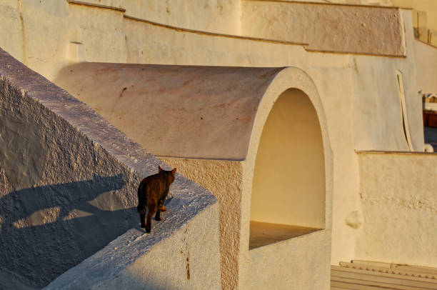 A cat and it's shadow in the evening, Firostefani