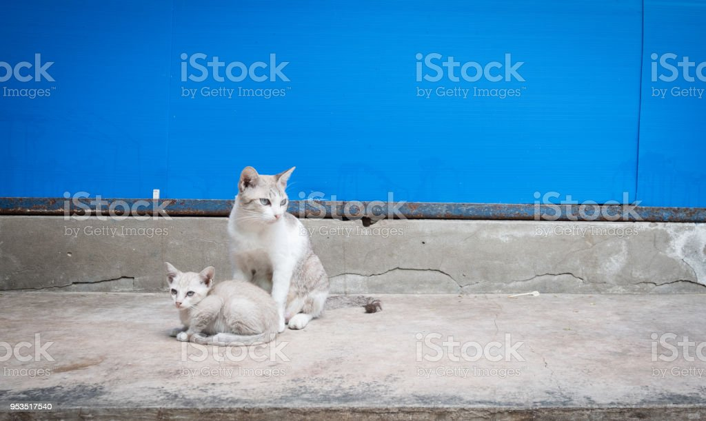 Cat and kitten by blue wall stock photo