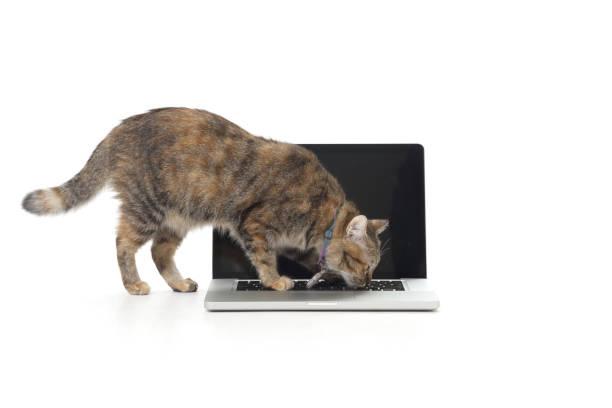 Cat and laptop picture id887910230?b=1&k=6&m=887910230&s=612x612&w=0&h=zt yvawse w9zxoj31ktqbxzj51 ax vhpkqmpqrxem=