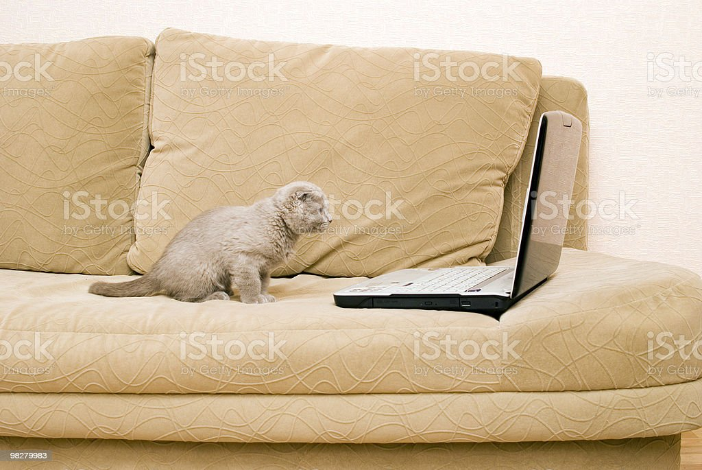 cat and laptop royalty-free stock photo