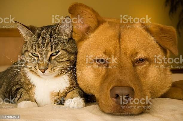Cat and large dog lazily laying next to each other picture id147650824?b=1&k=6&m=147650824&s=612x612&h=hpmp34oihkjpaskybsjewtwqtwwkk9vpnvu5dwdd 94=