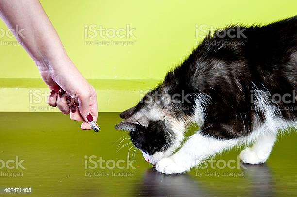 Cat and laser pointer picture id462471405?b=1&k=6&m=462471405&s=612x612&h=fzvu9z6pyv70x3fwfz4palnrw2x mkhkmbapspi3k7e=