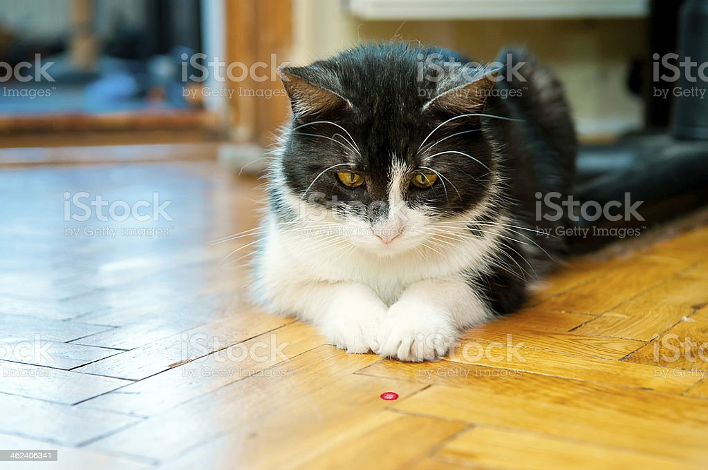 Cat and laser stick stock photo