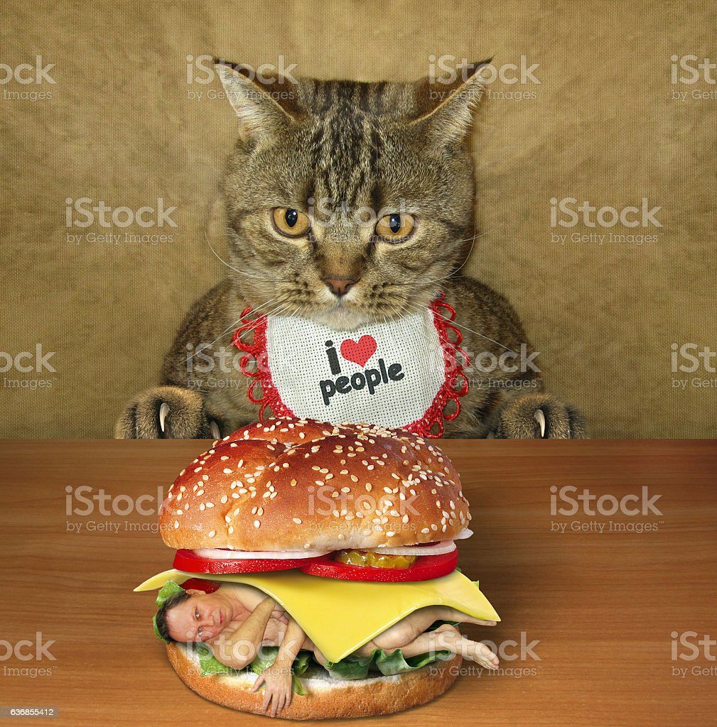 Cat and man burger stock photo