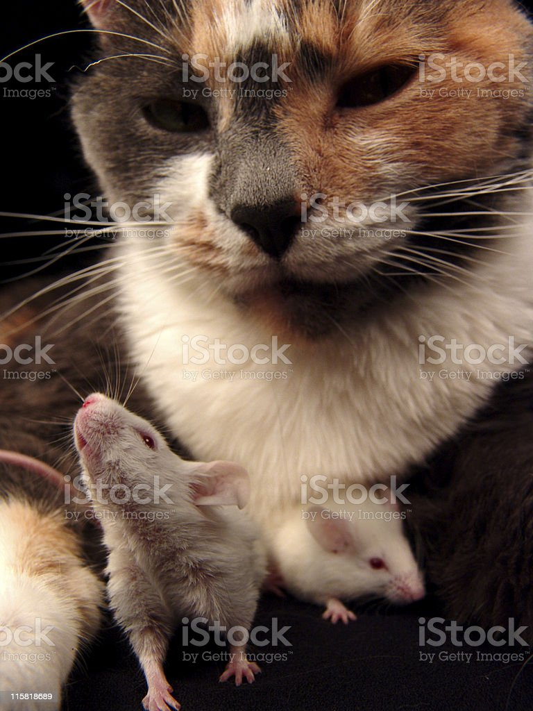 Cat and Mice, Good Buddies royalty-free stock photo