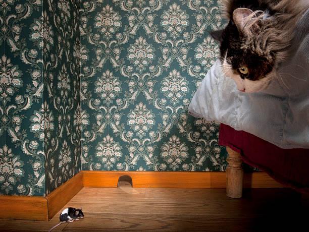 katz-und maus in einem luxuriösen altmodischen zimmer. - jagdthema schlafzimmer stock-fotos und bilder