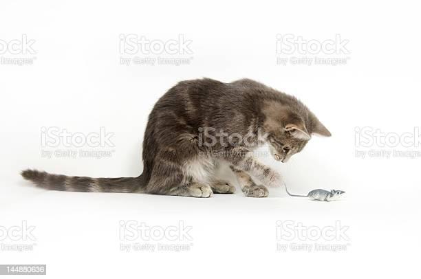 Cat and mouse picture id144880636?b=1&k=6&m=144880636&s=612x612&h=z34ep8fk66rvsj8kecub d0pmxljtv1p6pwuxbz2jts=