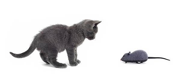 Cat and mouse picture id157676050?b=1&k=6&m=157676050&s=612x612&w=0&h=o5 qtkqdfjio0w4sm7ld diehlyetp8po9xeulwxsko=