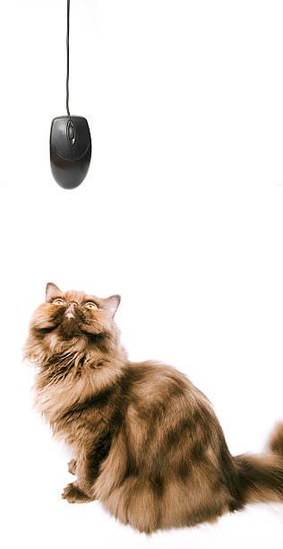 Cat and mouse picture id182228314?b=1&k=6&m=182228314&s=612x612&w=0&h=5nxshpz9uovmmkmibiinugqeweo22b8k cyi5kstgaw=