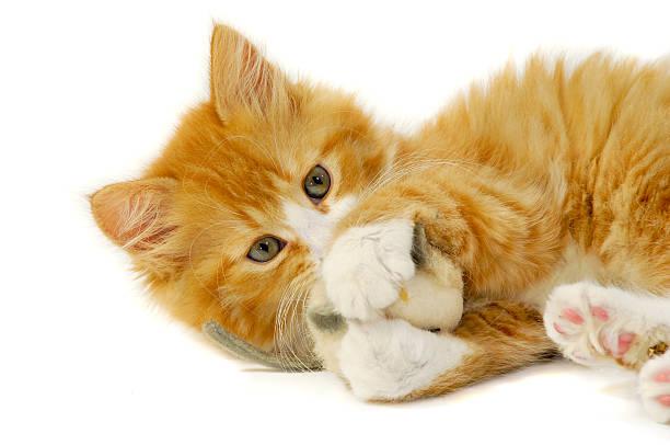 Cat and mouse picture id465669997?b=1&k=6&m=465669997&s=612x612&w=0&h=tteaztx11h5 v5yc22puosdob vh5gxmumkumbzgequ=
