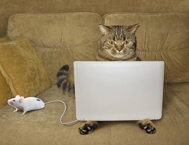 Cat and notebook picture id637789930?b=1&k=6&m=637789930&s=612x612&w=0&h=ubgin0mlhmzsf6lntz6ivyofvkabea9guqldeh leqq=