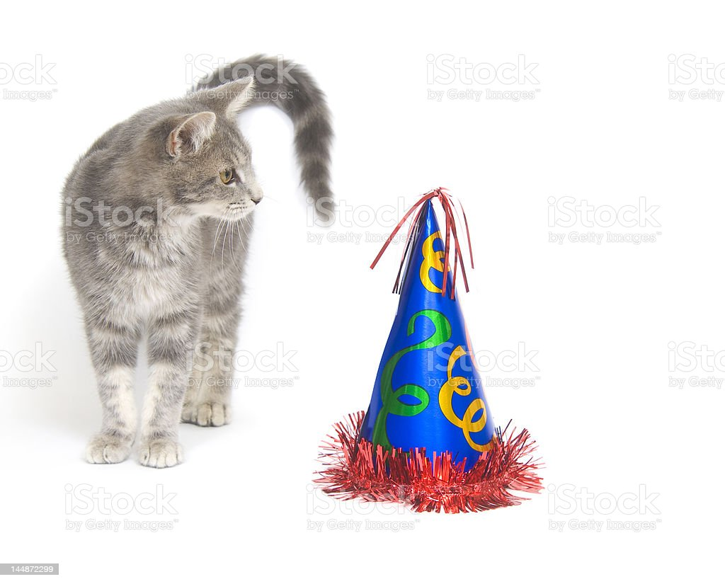 Cat and party hat royalty-free stock photo