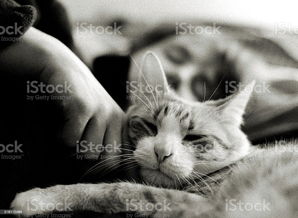 Cat and Person that Operates the Hand That Pets the Cat stock photo