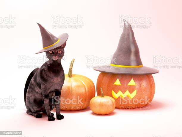 Cat and pumpkins wearing witch hat for halloween picture id1050516322?b=1&k=6&m=1050516322&s=612x612&h=fqqhos 4kjyr olzctgitumw63ja3tviy wmqohj2qq=